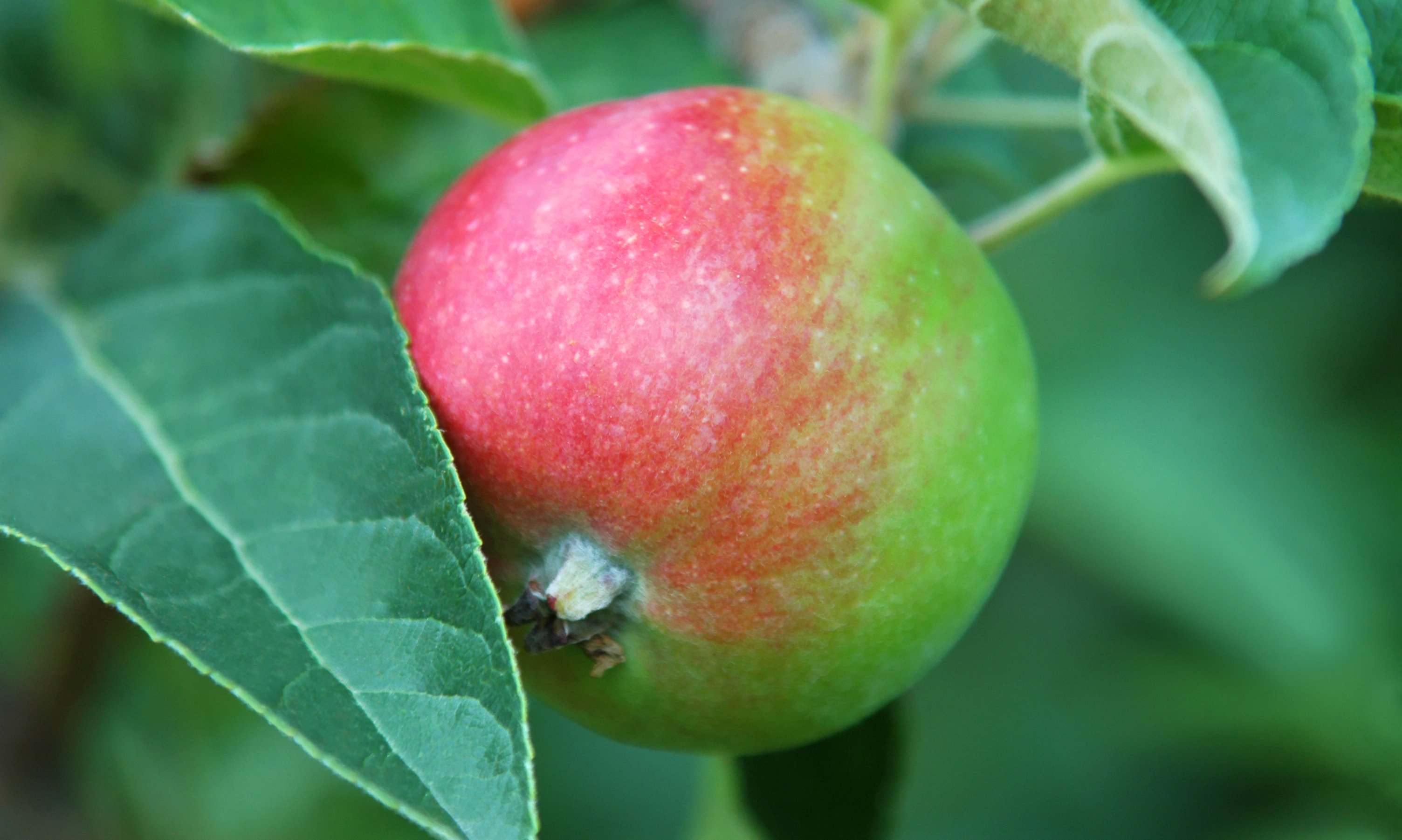 Me And the Apple Tree – Finding Our Growing Edge